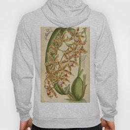 Odontoglossum praevisum 144 8780 Hoody