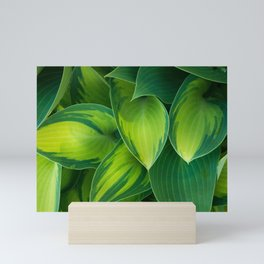 Hosta Camouflage Mini Art Print