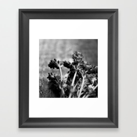 Lavender (Black & White) Framed Art Print