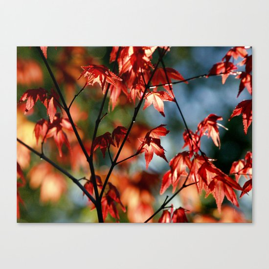 flora in flame Canvas Print