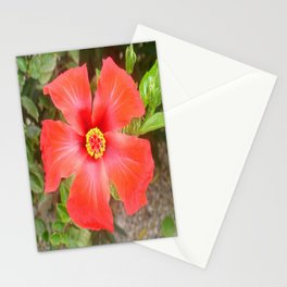 Head On Shot of a Red Tropical Hibiscus Flower Stationery Cards