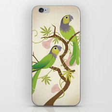 Black-capped conure iPhone & iPod Skin