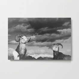 rams | fig. 01 | odd ram out Metal Print