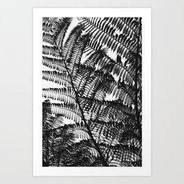 Black and White Fern Silhouette Pattern Art Print