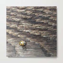 The Little Ladybug Metal Print