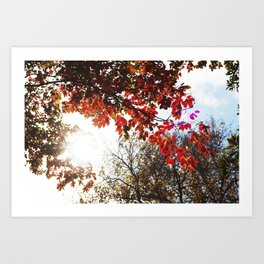 Autumn in the Air Art Print