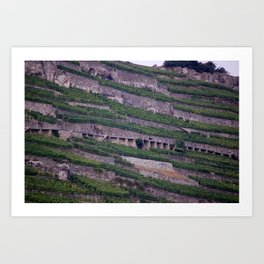 Vineyards 2 Art Print