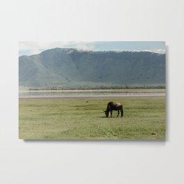 Tanzanian Safari Metal Print