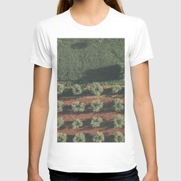 Aerial photo, nature textures, drone photography, olive trees, Apulia, Italian countryside T-shirt