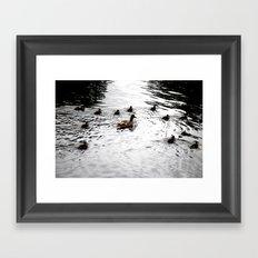 Duck 01 Framed Art Print