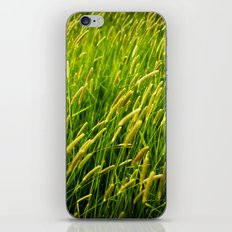 Spring Grass iPhone & iPod Skin