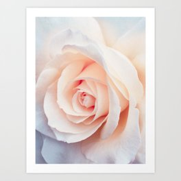 Rose | Flowers Photography | Spring | Blush Pink | Love Art Print