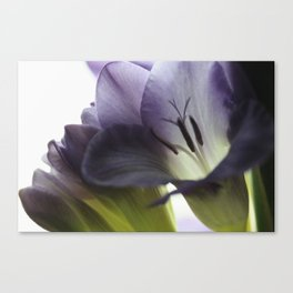 Freesia flowers Canvas Print