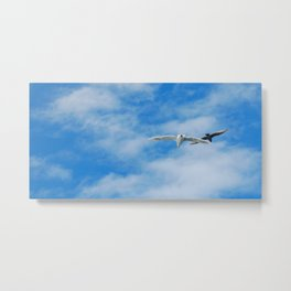 gulls on the wing Metal Print
