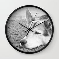 husky Wall Clocks featuring husky by MrBdigital