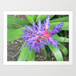 Blue Tango Planto Art Print