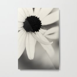 Black Eyed Susan in Black and White Metal Print