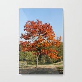 Autumn Colours in Greenwich Park, London Metal Print