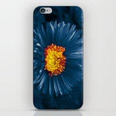 blue aster iPhone & iPod Skin