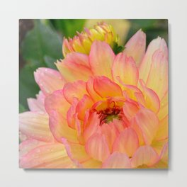 """Coral Tipped"" Dahlia by Teresa Thompson Metal Print"