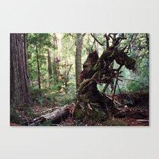 forest decomposition Canvas Print