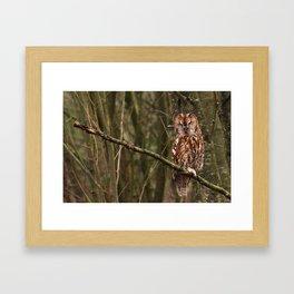 Sleepy Tawny Owl Framed Art Print
