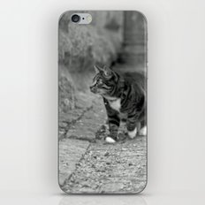 The cat in the alley iPhone & iPod Skin