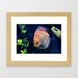 Dzuko Framed Art Print
