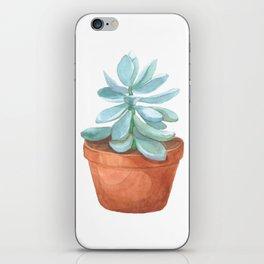Succulent in the pot iPhone Skin