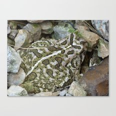 toad 2016 Canvas Print