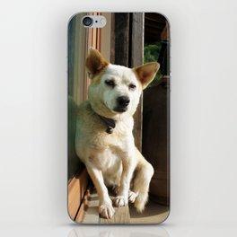 sleepy dog iPhone Skin