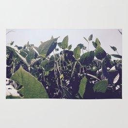 Soybean Paradise Rug