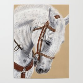 Horse Portrait 01 Poster