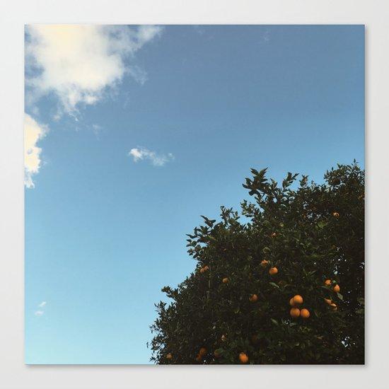California oranges Canvas Print