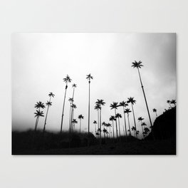 Valle Del Cocora Canvas Print
