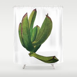 Pacific Ice Plant Shower Curtain