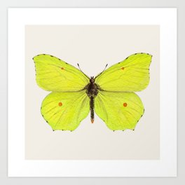 Watercolor Brimstone Butterfly Art Print