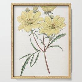 Flower 1228 coreopsis aurea Golden Coreopsis13 Serving Tray