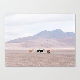 Pastel Llamas - South America Landscape Canvas Print
