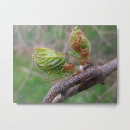 little leaf 3c Metal Print