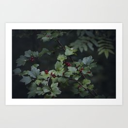 Mountain currant Art Print