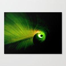 Cannaceae Canvas Print