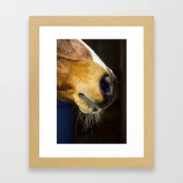 Horse Profile Framed Art Print