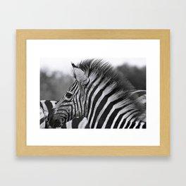 Young Punk, Africa wildlife Framed Art Print