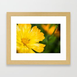 Macro Yellow Flower Framed Art Print