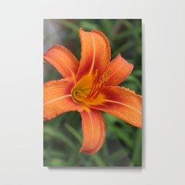Orange Day Lily Metal Print