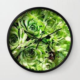 GREEN HENS N' CHICKS SEDUMS-SUCCULENTS Wall Clock