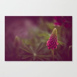 Pink Flow Canvas Print