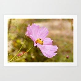 AFE Pink Cosmos Art Print