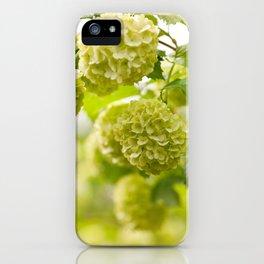 Viburnum opulus Roseum flowers iPhone Case